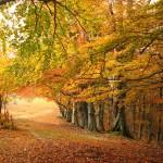 fall-in-frisco