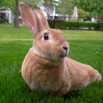 scooter the rabbit